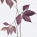 Botanical-u